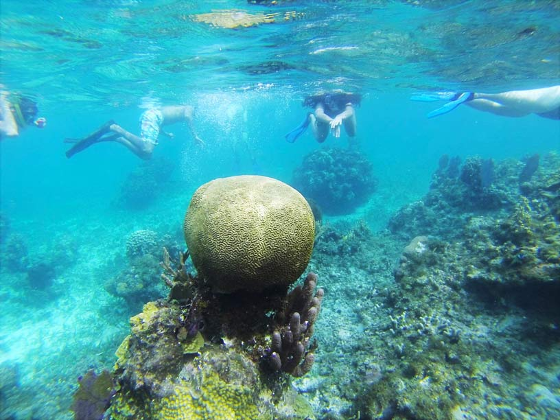 Snorkelling coral