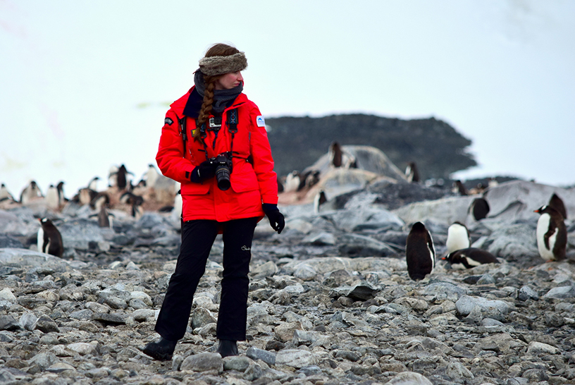 The wildlife of antarctica incredible animals travelers for Can you visit antarctica