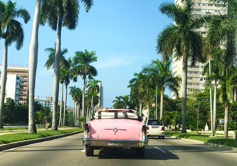 car and palm trees in havana