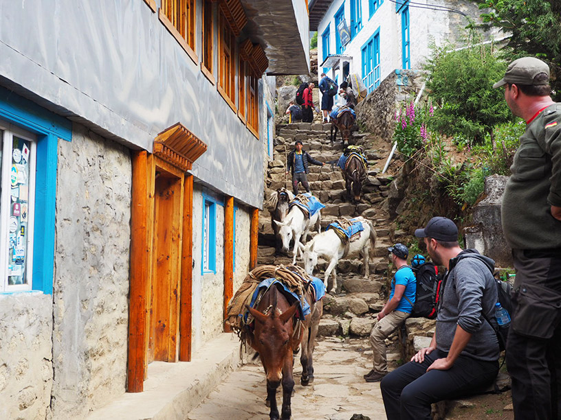 Donkeys carrying goods between villages